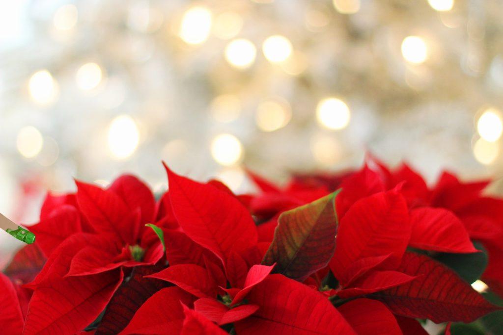 regali solidali ant stelle di Natale